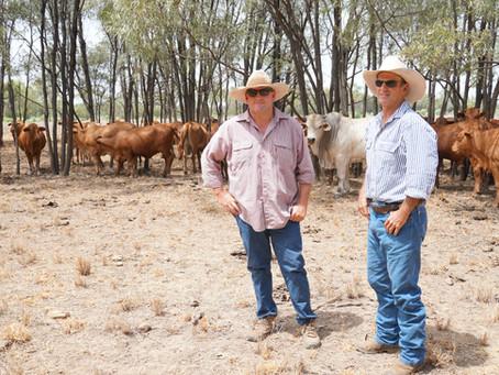 Combining Sustainable Farming, Animal Welfare and Commercial Success