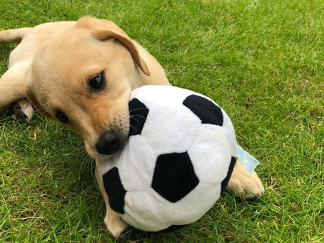 4 Things to Think About when Getting a Puppy!