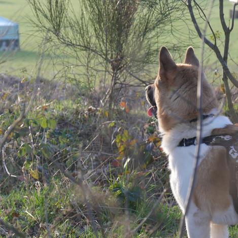 Dog training available