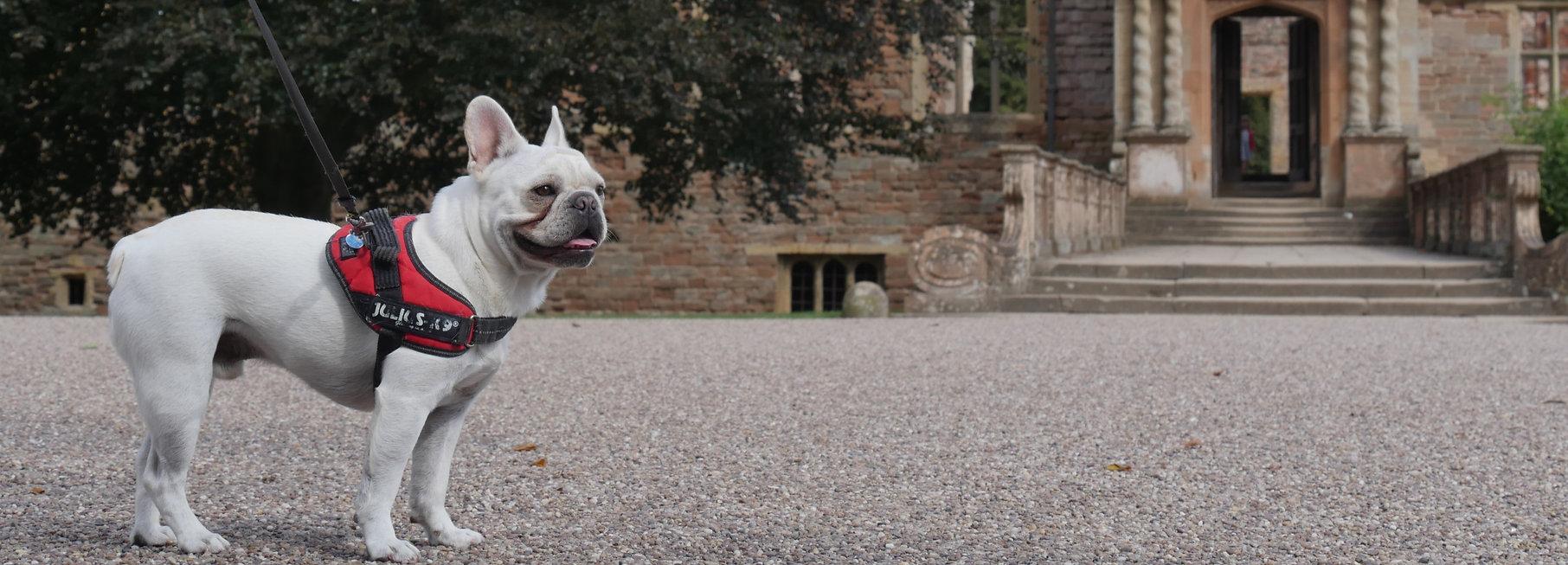 Dog%20Boarding%20in%20Rufford_edited.jpg