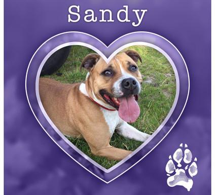 SANDY1.jpg