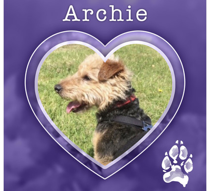 ARCHIE1.jpg
