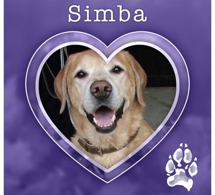 SIMBA1.jpg