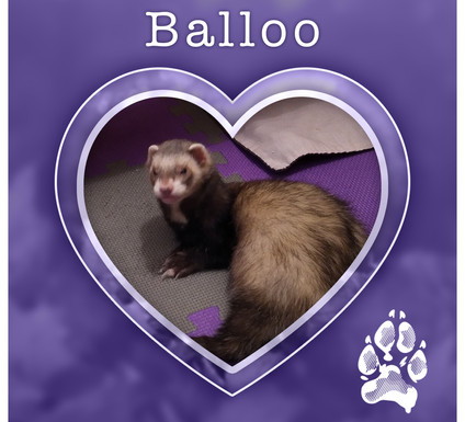 BALLOO1.jpg