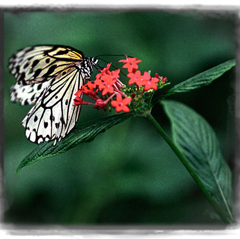 Soft lips fluttering  On my eyelids and down my cheek Butterfly lover