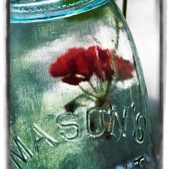 Summer Preserved in a Jar