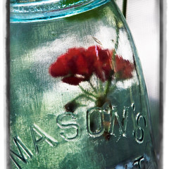 Summer Preserved in a Jar