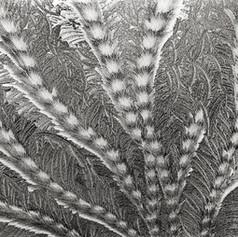 Ice Botanical