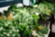 Green Vegetables