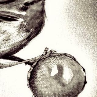 Pettirosso in bianco e nero.jpg