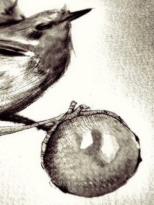 Pettirosso in bianco e nero