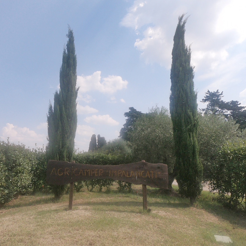 Campingplatz im Olivenhain