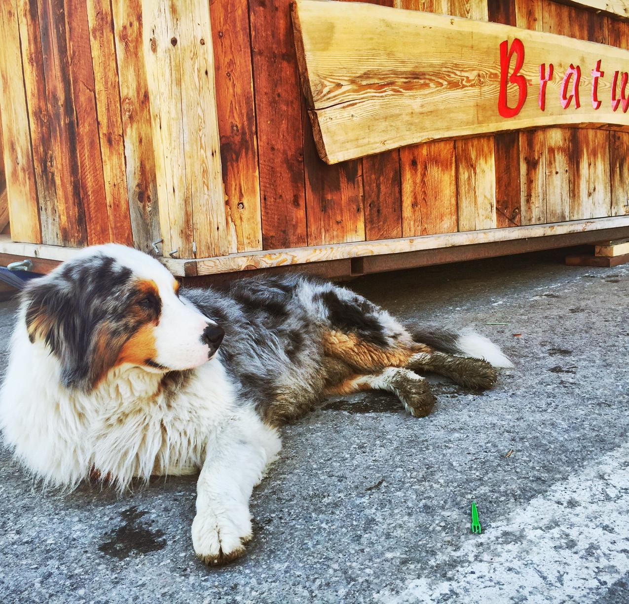 Braaaatwurst