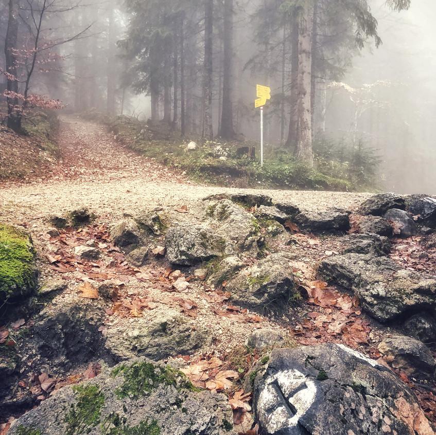 Waldweg Richtung Pendling