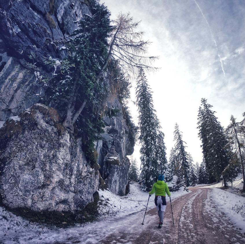 Forstweg Pendling