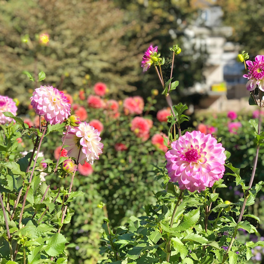 Blumenvielfalt in Baden-Baden