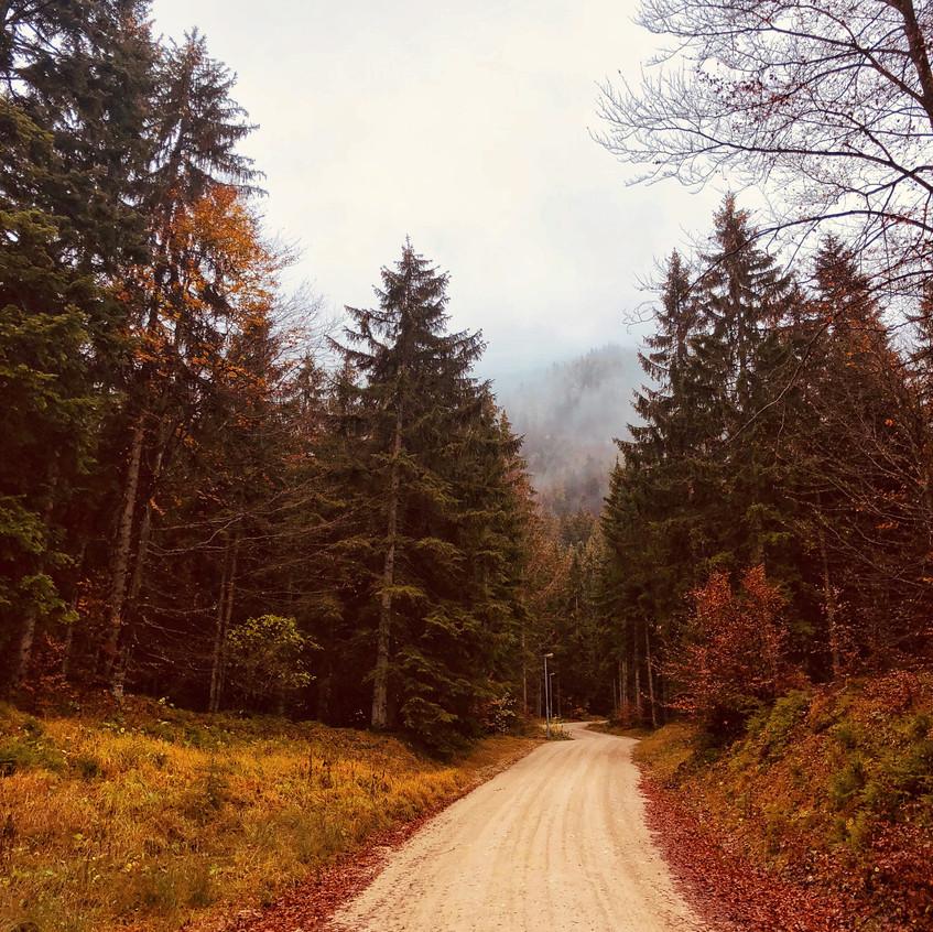 Forststraße Richtung Pendling