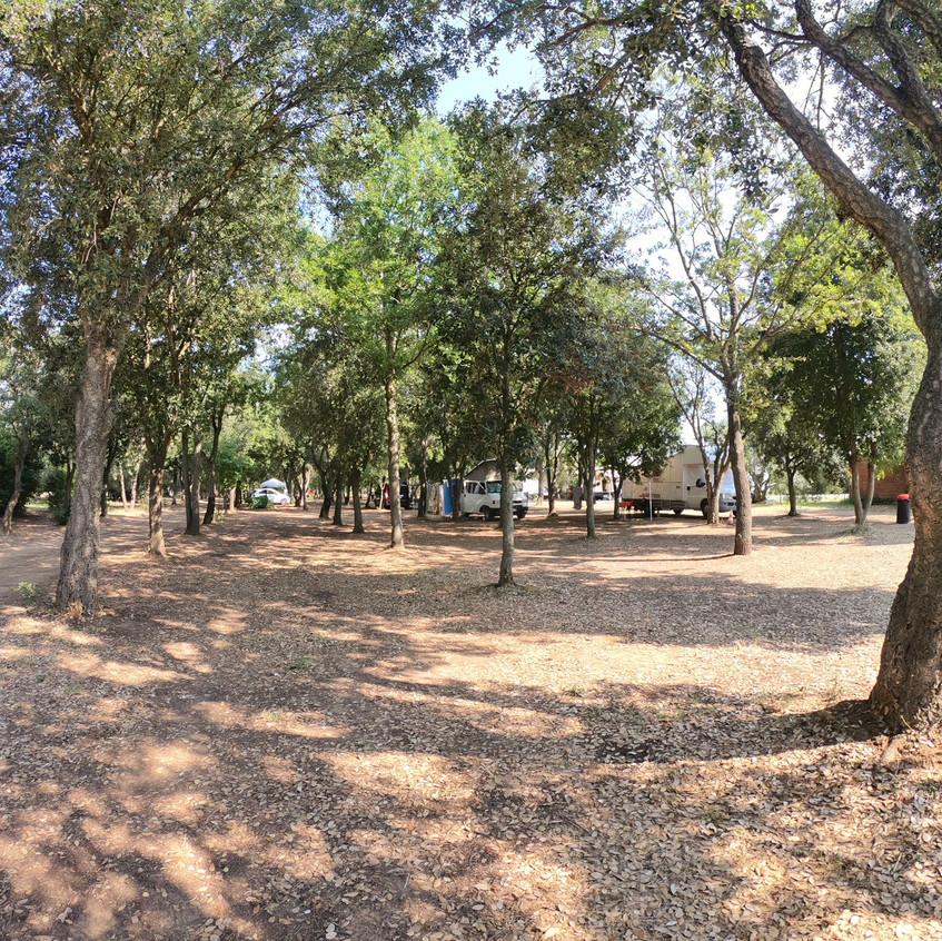 Camping im Olivenhain
