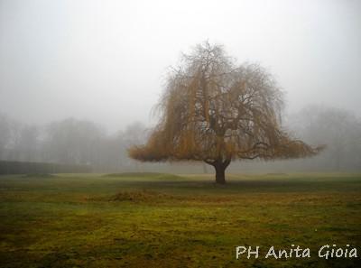 PH Anita Gioia-LONDON/UK, MIST IN QUEEN'S PARK