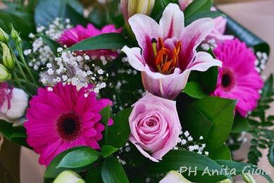 PH Anita Gioia-FLOWER SERIES 16