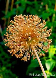 PH Anita Gioia-FLOWER SERIES 7