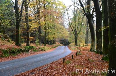 PH Anita Gioia-LAKE DISTRICT/UK, FOREST, SCENIC DRIVE