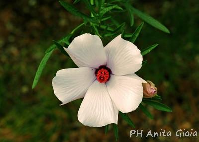 PH Anita Gioia-FLOWER SERIES 12