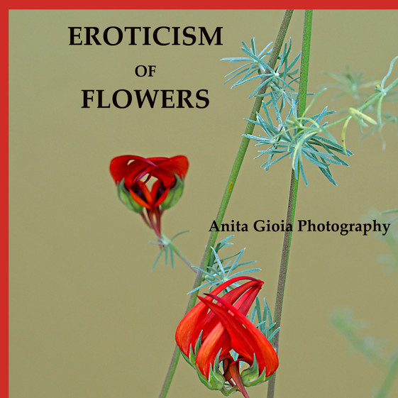 PDF - PHOTOS AND QUOTES - EROTICISM OF FLOWERS - IN ENGLISH £35
