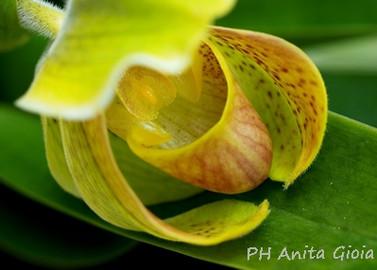 PH Anita Gioia-FLOWER SERIES 6