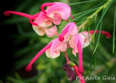 PH Anita Gioia-FLOWER SERIES 11