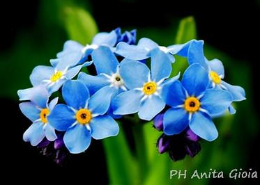 PH Anita Gioia-FLOWER SERIES 19