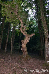PH Anita Gioia-MOLISE/ITALY, UNIQUE TREE