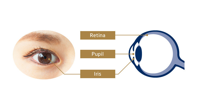 Iris Identification Technology and Retina Identification Technology