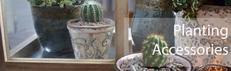 Indoor Planting Pots with cacti