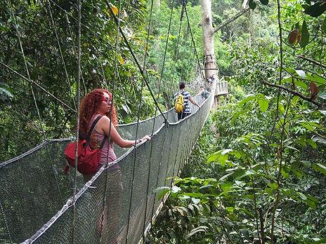 canopy walk borneo