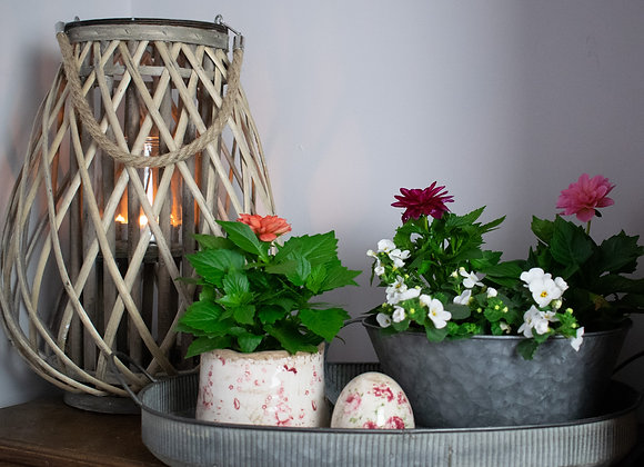Willow Lantern with Oval Zinc Tray