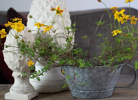 Stone Artichokes and Indoor Zinc Flowerpot