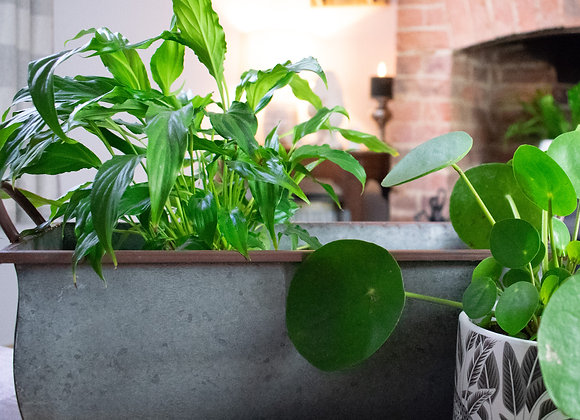 Planting Trough for Indoors or Outdoors