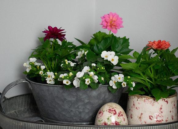 Zinc Planting Pot with Handle