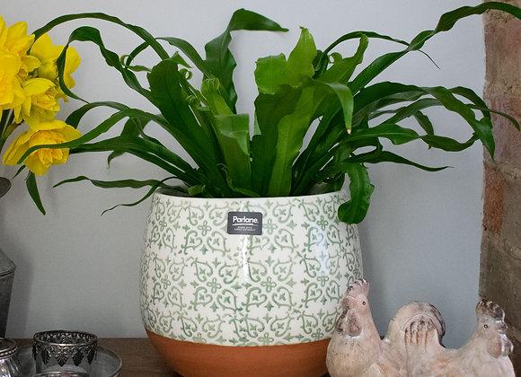 Large Indoor Ceramic Pot