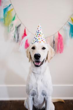 birthday lab