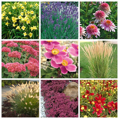 Perennials and Grasses.jpg
