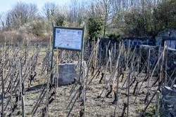 Entretien de la vigne pédagogique