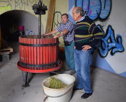 Vendange de la vigne pédagogique