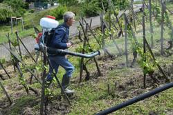 Entretien des vignes