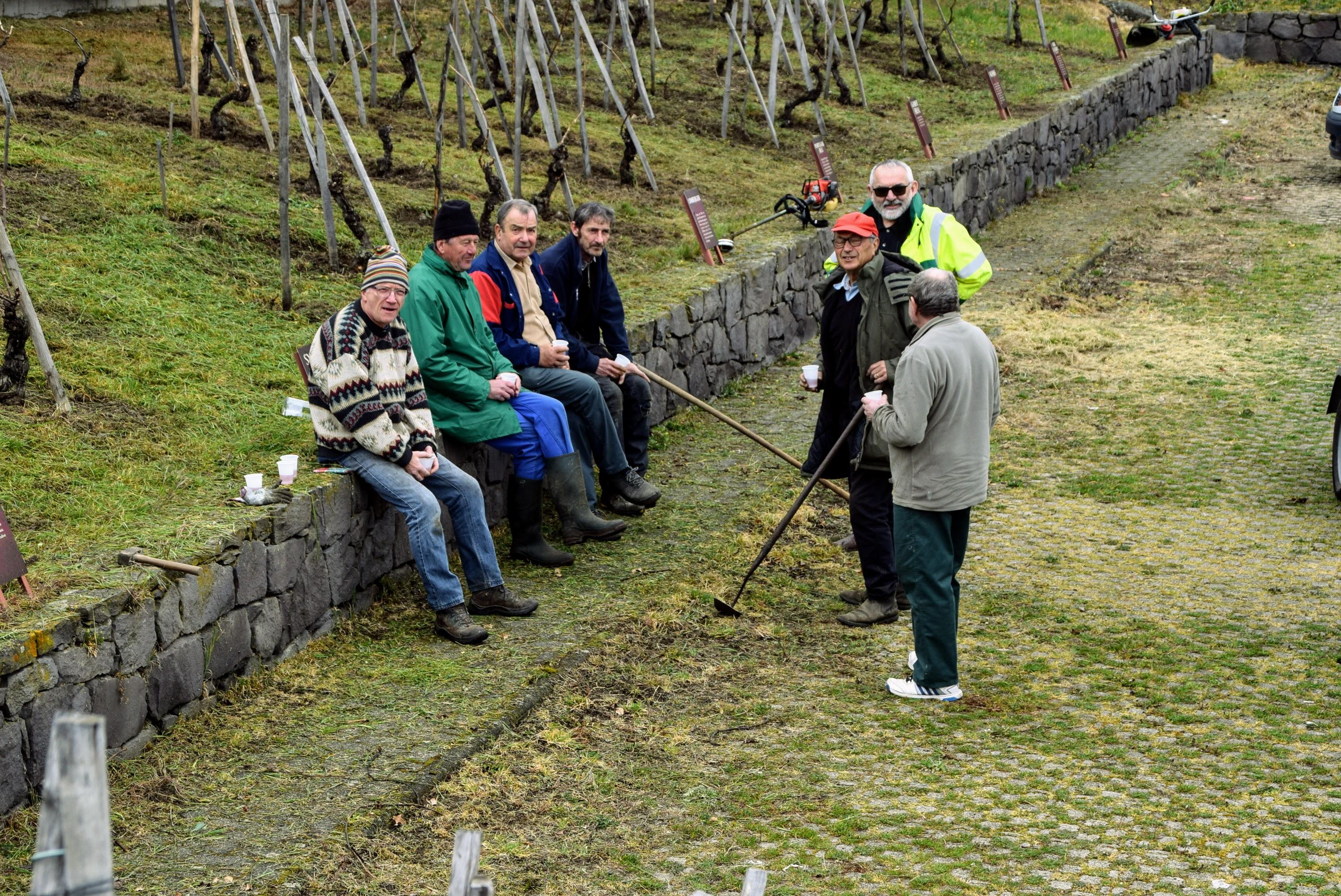 Entretien de la vigne du musée