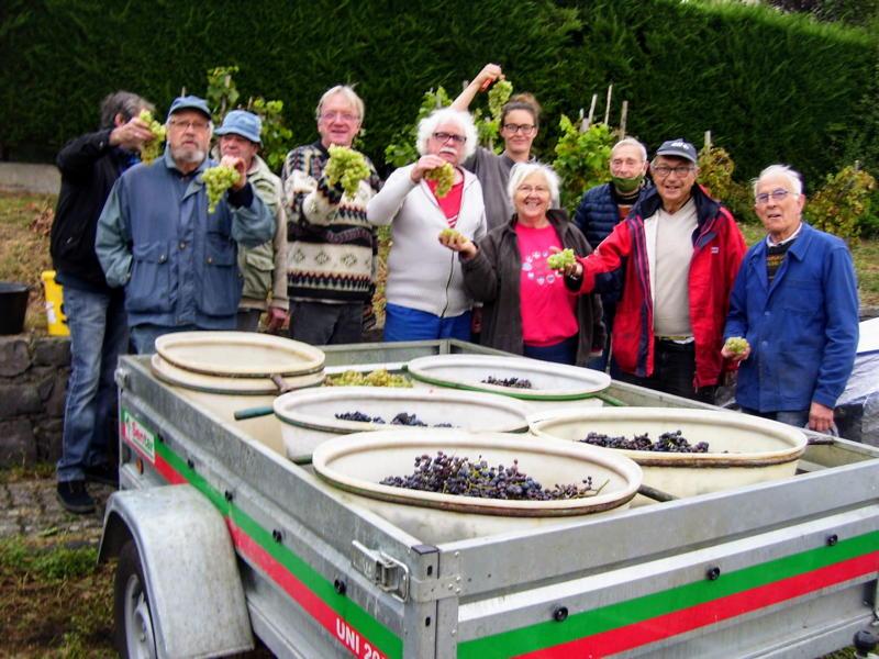 Vendange de la vigne du musée