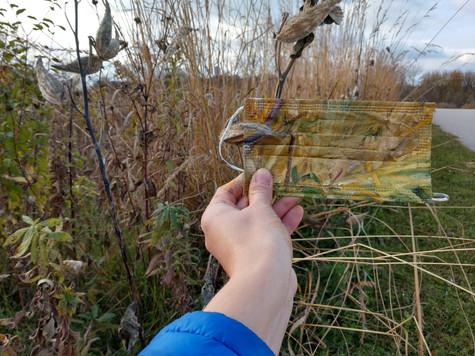Maskweed