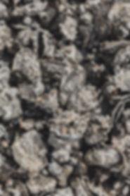 Informationen zu wilde Austern aus Bremen und Hamburg