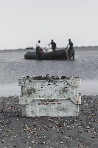 Austern kaufen